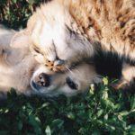אוכל וטיפולים וטרינרים לחתולים וכלבים